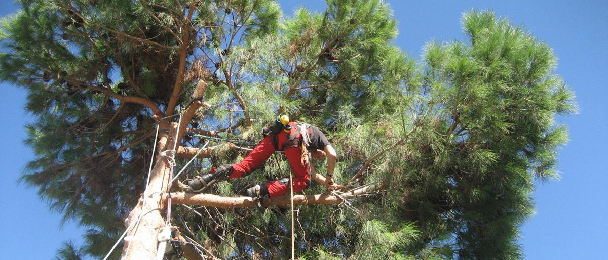 Permalink auf:Baumpflege